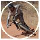 Mountain Biking Tips